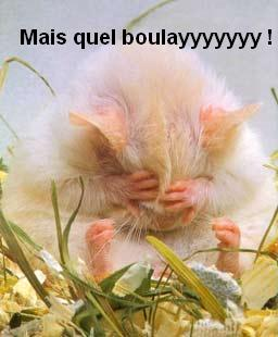 http://bigoudi33.free.fr/img/hfr/boulay.jpg